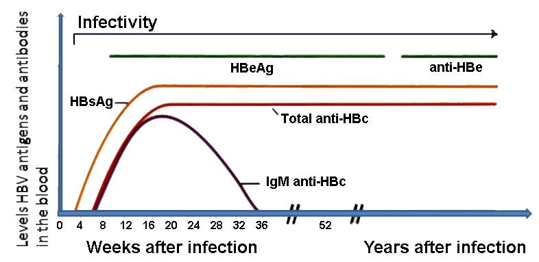 Hepatitis B infection | Working Fit