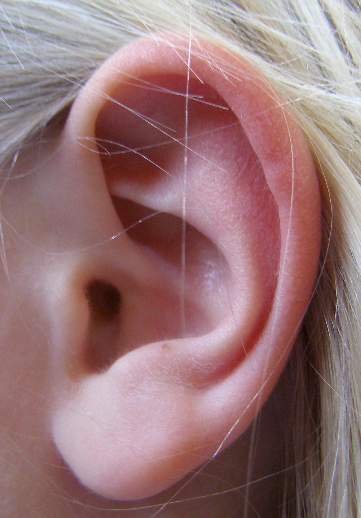 Строение внутреннего уха описание схема фото