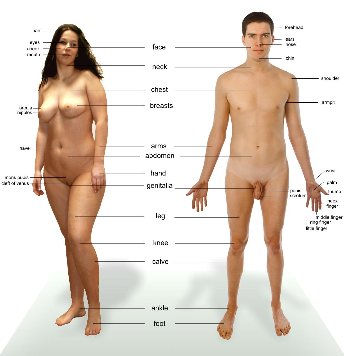 3d anatomy sex hentai photos